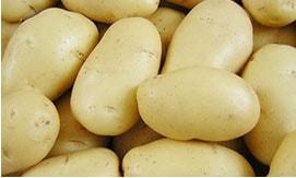 Почему нужно обновлять семена картофеля?