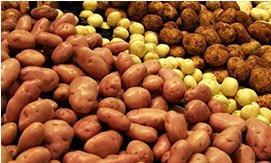 Картофель в Украине сейчас